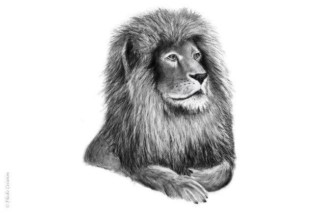 Illustration Dessin Animal Lion 001