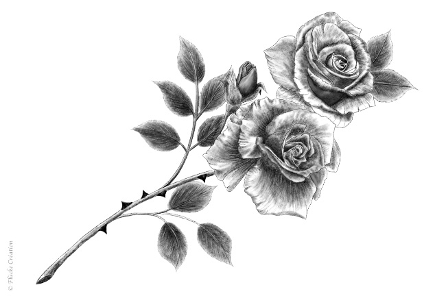 Illustration Dessin Roses 002